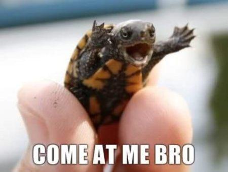turtlecute