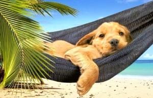 lazysummerdog