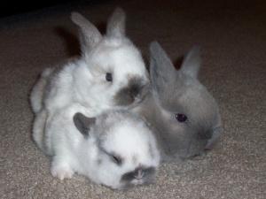 bunniescuddle