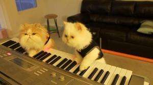 duet-cats